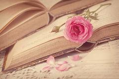 flores-cor-de-rosa-33415218